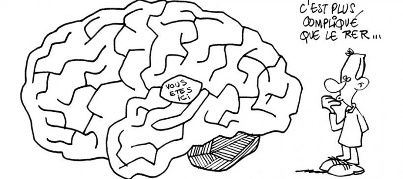 Le cerveau, qu'en dites-vous ? | Atoutcerveau